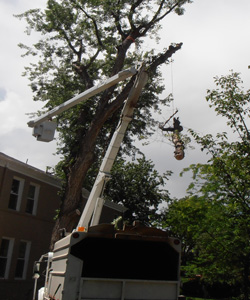 Technical Tree Removal